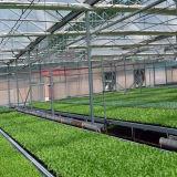 La vente chaude filment neuf la serre chaude pour le légume