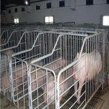 Pig Breedingのための熱いDIP Galvanizing Steel Enclosure