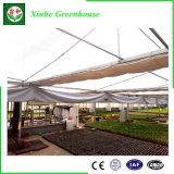 Chambre verte en verre de bâti en aluminium avec le toit de voûte/triangle