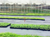 80GSM-120GSMの1m-4mの温室の地被植物ファブリック