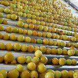 De Puree van de abrikoos met Uitstekende kwaliteit