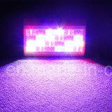 LED 24 PCS*1W Festival RVB décorées coquille plastique stade Lumière stroboscopique