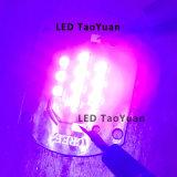 Luz UV 365nm, módulo novo da placa do diodo emissor de luz de 395nm 25W