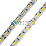 Nuovo indicatore luminoso di striscia flessibile del LED con alto SMD5054 luminoso (60LEDs/M)