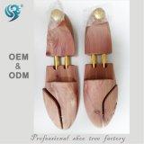 La publicité du cèdre d'arbre de chaussure, garde de chaussure