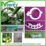 بندورة بلاستيكيّة مشبك لأنّ خضرة & ثمرة ينمو