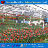 Serre chaude agricole de Multi-Envergure professionnelle de la Chine