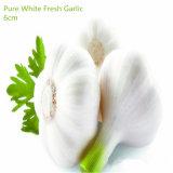 I UAE introducono l'aglio sul mercato bianco fresco del raccolto caldo di vendite 2017