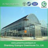Invernadero de cristal para el establecimiento vegetal