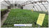 Estufa da película plástica de preço de fábrica de China com sistema hidropónico