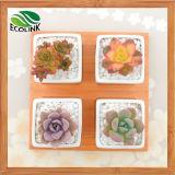Bamboo Stand를 가진 4 Combination Square Ceramic Succulent Pot