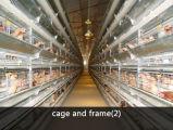 Poulet automatisé de haute qualité chinois House/l'Aviculture (Shed XGZ-GR017)