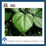 Koper Chlorophyllin van het Natrium van 100% het Natuurlijke