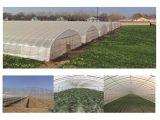 Gases com efeito de túnel alta de plástico de tomate