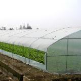 Зеленый дом для выращивания овощей растет