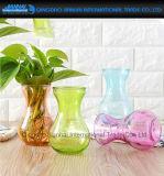 Покрашенная ваза стеклянного корабля статьей обеспечения водоросли флористическая