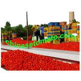 Aséptica pasta de tomate enlatado