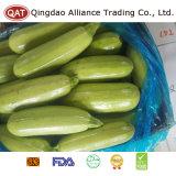 Zucchini verde inteiro fresco com bom preço