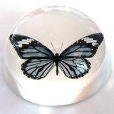 Bogen-transparentes Kristallpapiergewicht - freies Stich-Firmenzeichen