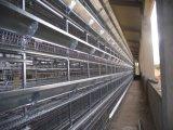 Het staal prefabriceerde Gemakkelijk assembleert het Huis van het Gevogelte van de Kip