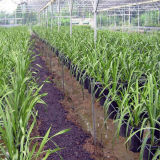 La vendita calda recentemente filma la serra per la verdura
