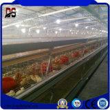 Impresa di pollo chiara prefabbricata commerciale del pollame dell'animale domestico della struttura d'acciaio