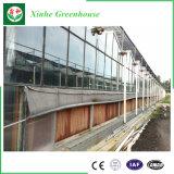 Invernaderos de cristal de alta tecnología hidropónicos para Growing vegetal