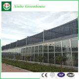 Invernadero agrícola del palmo del invernadero de cristal multi del invernadero