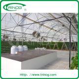Multi moderno túnel del tramo de la película de plástico para la agricultura de invernadero hydroponnic