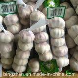 Чеснок нового урожая свежий естественный нормальный белый