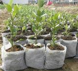 Zx-350 Eco袋の機械を作る非編まれた実生植物袋