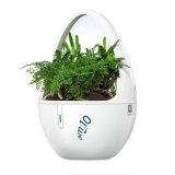 Il giardino dell'interno con coltura di Soiless Pianta-Ha basato il diffusore dell'aroma con plasma
