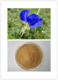 最もよい品質の共通のDayflowerのハーブのエキスの粉