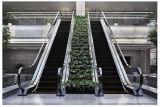 Автоматически Vvvf эскалатора на торговый центр