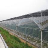 Serre chaude en verre de Venlo d'approvisionnement d'usine de la Chine