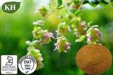 Выдержка листьев Oregano выдержки Vulgare Origanum 100% Kingherbs естественная