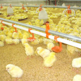 Set pieno Highquality Automatic Poultry Equipment per Broiler