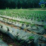 50g de zwarte Witte Dekking van de Installatie van de Landbouw van de Niet-geweven Stof van pp