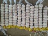 Witte Knoflook van /Pure van de Verpakking van het Knoflook van de hoogste Kwaliteit het Verse Kleine