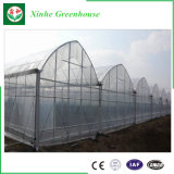 플레스틱 필름 다중 경간 야채를 위한 Hydroponic 녹색 집