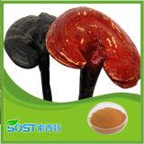 Natural de alta calidad de Ganoderma lucidum Extracto de la espora