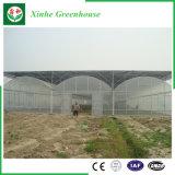 Serra di verdure del film di materia plastica del fiore commerciale