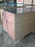 포플라 박달나무 또는 경재 코어 건축 합판과 Formwork 합판 (HB208)