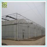 Chambre verte de pompes à eau pour la production végétale