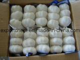 Aglio bianco fresco cinese (4.5-5.0-5.5-6.0cm)