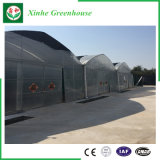 야채 또는 정원 또는 꽃 또는 농장 다중 경간 플라스틱 온실
