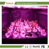 LED를 가진 Keisue 가구 직업적인 수직 농장은 빛을 증가한다