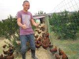 Unigrow Zufuhr-Zusatz für Viehbestand-Züchtung