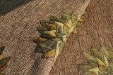 Tessuto da arredamento di Folwer del Chenille per il sofà