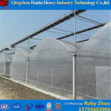 Professional Manufacture Plastic Greenhouse Film in Clouded